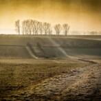 morning walk (4)