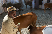 animal market (1)